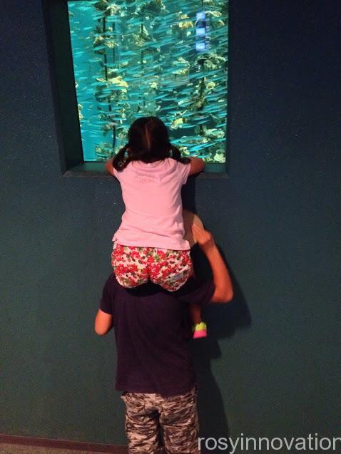 宮島水族館の感想