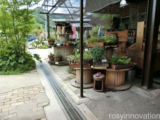 真庭あぐりガーデンうさ八24 植物