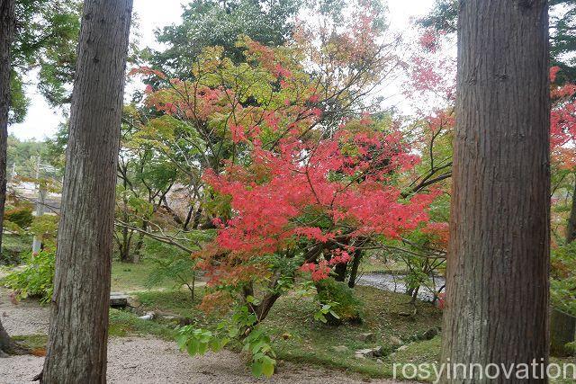 宝福寺16 紅葉