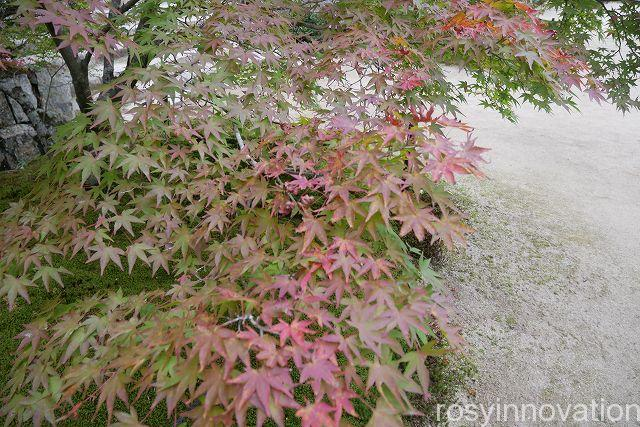 宝福寺24 紅葉シーズン