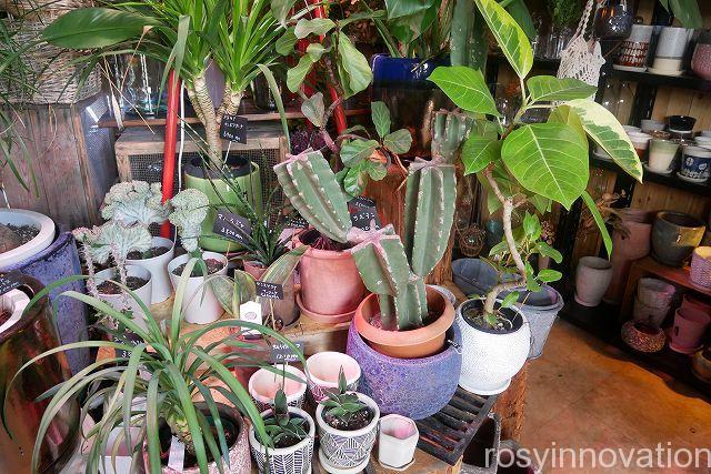 はなうりカフェ24 植物