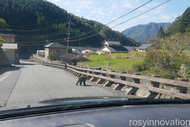 備中松山城32 野生の猿