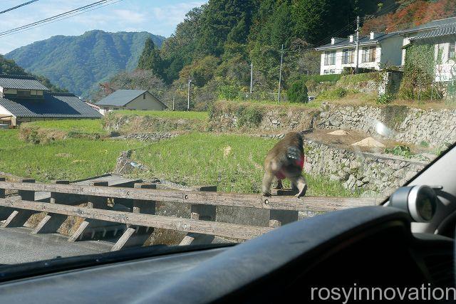 備中松山城33 野猿