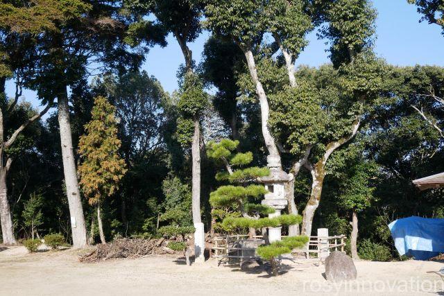 葦守八幡宮12 松の木