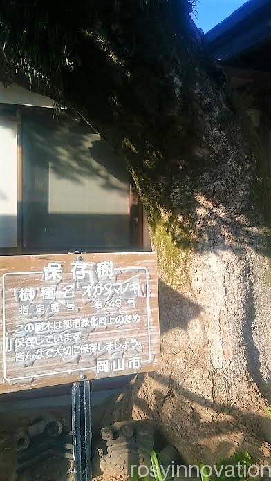 伊勢神社11 保存樹 説明書き