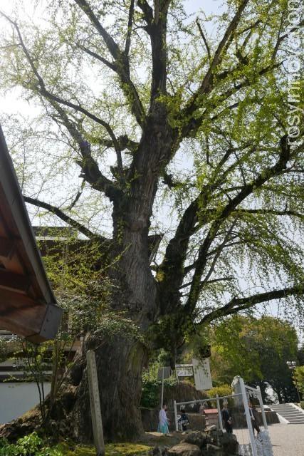 吉備津神社20 木