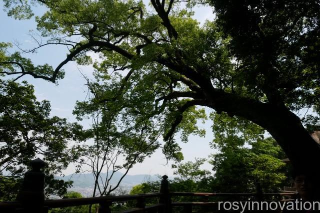 金刀比羅宮28 大木