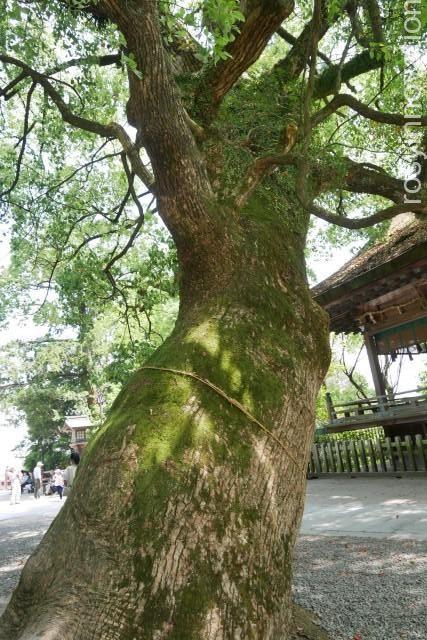 金刀比羅宮24 木