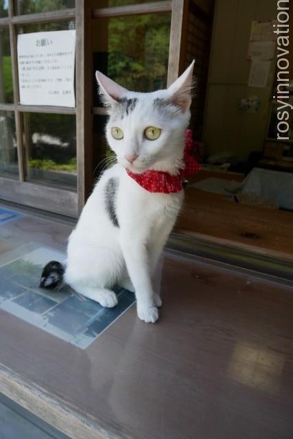 木山神社 (21)神社猫