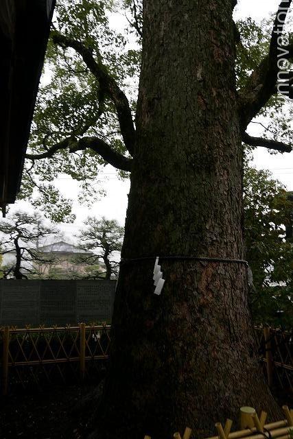 田村神社 (6)木