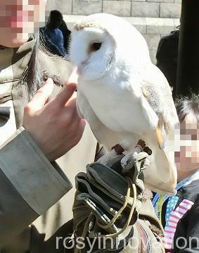 USJ ふくろう便 消印サービス (3)ふくろう