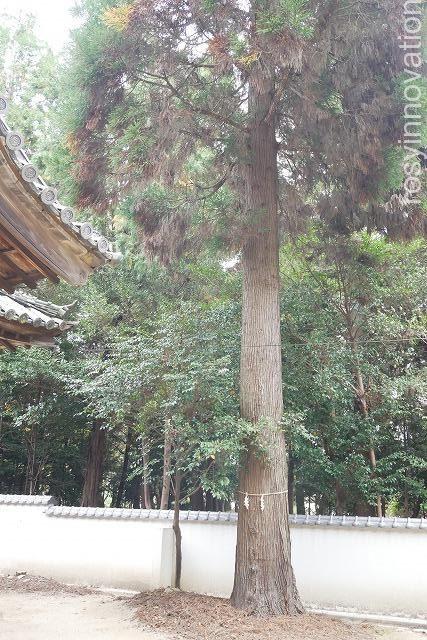 靱負(ゆきえ)神社 (10)木